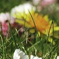 Dreamy Spring by Kim Tran