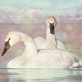 Dreamy Swans #1 by Patti Deters
