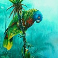 Drenched - St. Lucia Parrot by Christopher Cox