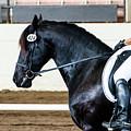 Dressage Horse Show by Ben Graham