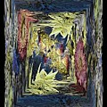 Dried 2 by Tim Allen