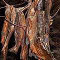 Dried Fish by Bob Phillips