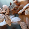Dried Flowers by Terri Creasy