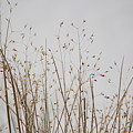Dried Grass At White Sands by Colleen Cornelius