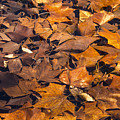 Dried Leaves by Bob Phillips
