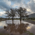 Dried Tree Reflected by Daniele Fanni