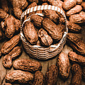 Dried Whole Peanuts In Their Seedpods by Jorgo Photography - Wall Art Gallery