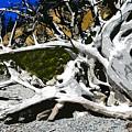 Drift Wood by David Lee Thompson