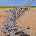 Drift Wood On The Beach by Linda Pulvermacher