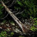 Drifted Tree by David Jilek