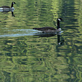 Drifting Geese by Marie Leslie
