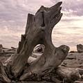 Driftwood Along Dungeness Spit by NaturesPix