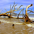 Driftwood And Waves by Lisa Wooten