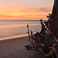 Driftwood At Sunset by Dick Hopkins