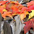 Driftwood Autumn Leaves Art Prints Baslee Troutman by Baslee Troutman