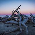 Driftwood Beach 1 by Brandon Falls