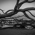 Driftwood Beach 4 by Brandon Falls