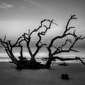 Driftwood Beach Dawn Jekyll Island Georgia by Reid Callaway