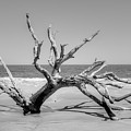 Driftwood Beach In Black And White by Linda Covino