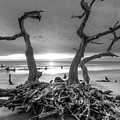 Driftwood Black And White by Debra and Dave Vanderlaan
