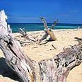 Driftwood Buck Island National Park by Thomas R Fletcher