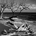 Driftwood Bw Fine Art Photography Print by James BO Insogna