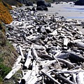 Driftwood By The Ton by Will Borden