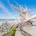 Driftwood C141349 by Rolf Bertram