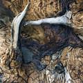 Driftwood Canyon II by D Kadah Tanaka