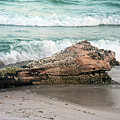 Driftwood by David Campbell