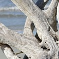 Driftwood Detail by Al Powell Photography USA