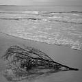 Driftwood - Good Harbor Beach by David Gordon