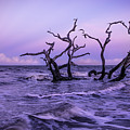 Driftwood In The Waves by Kim and Joe Brownfield