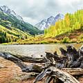 Driftwood by Joseph Hawk
