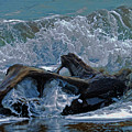 Driftwood by Keith Lovejoy