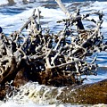 Driftwood Lace by Janal Koenig
