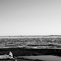 Driftwood On Arctic Beach Balck And White by Anthony Jones