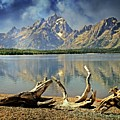 Driftwood On Jackson Lake by Marty Koch