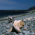 Driftwood On Rocky Beach by Sally Weigand