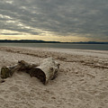 Driftwood On West Sands by Adrian Wale