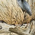 Driftwood Splendor by James Williamson