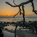 Driftwood Sunrise by Charlie Choc