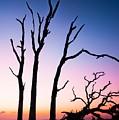 Driftwood Sunrise by Zachary Bale