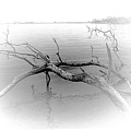 Driftwood Vignette - Grayscale by Brian Wallace