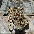Drinking Jaguar by Katherine Nutt