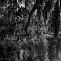 Drippin With Spanish Moss At Middleton Place by Dale Powell