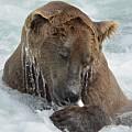 Dripping Grizzly Bear by Patricia Twardzik
