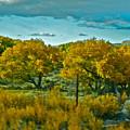 Driving Foliage by Gwyn Newcombe