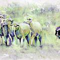 Driving Sheep by Steve Gamba