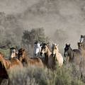 Driving The Horses by Carol Walker